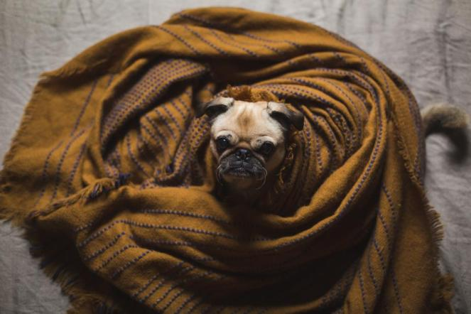 dog-wrapped-in-bedding_925x.jpg