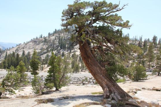 tree-1870524_1920 (1).jpg