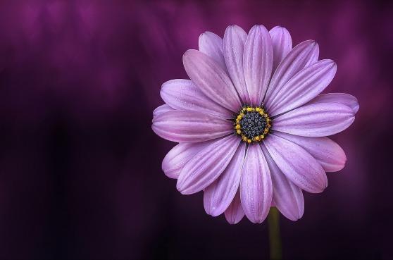 flower-729512_1920