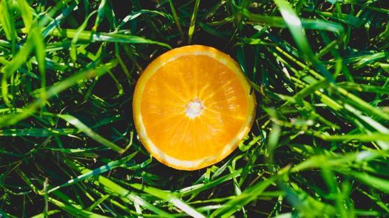 orange-in-grass_925x
