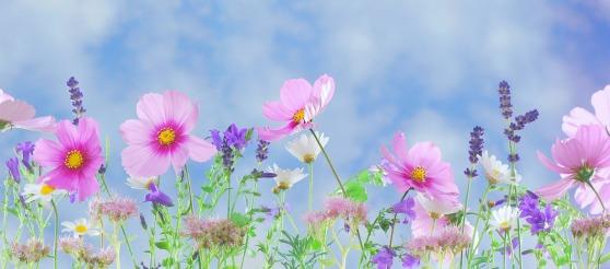 wild-flowers-571940_1920