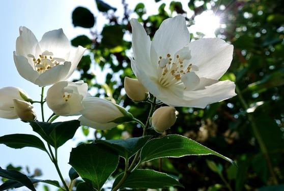 flower-3444238_640.jpg