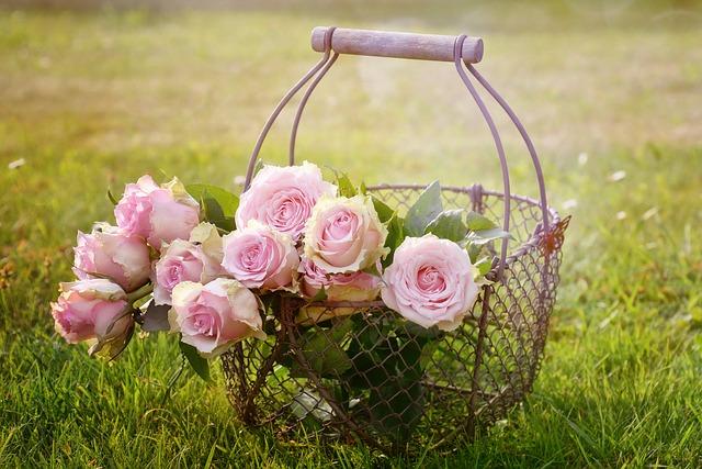 roses-1566792_640